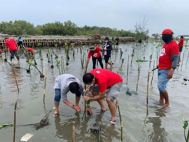 San Miguel Corporation (SMC) Begins Massive Mangrove Planting in Bulacan (SMC Press Release July 29, 2020) 2
