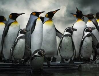 google penguen