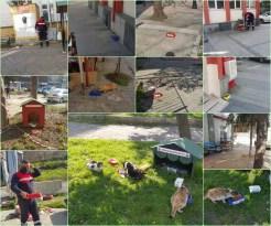 Belediye Sokak Hayvanlarını Unutmadı