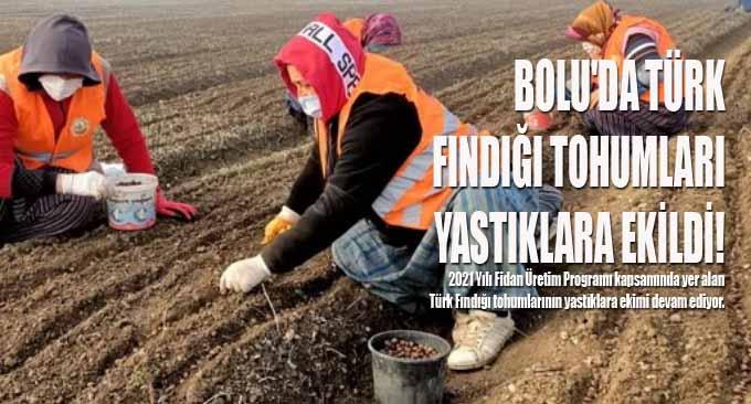 Bolu'da Türk Fındığı Tohumları Yastıklara Ekildi!