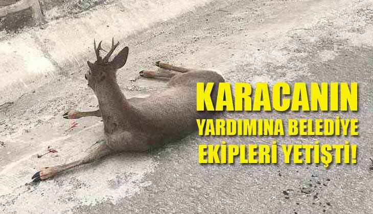 Karacanın Yardımına Belediye Ekipleri Yetişti!