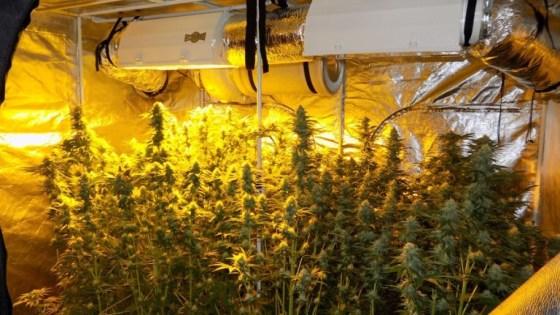 Място за производство на марихуана в България. Фото: прес-център МВР