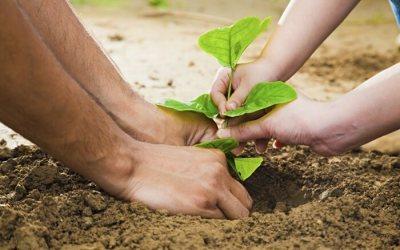 Над 20 000 дървета ще бъдат засадени от децата на България – пролет 2017
