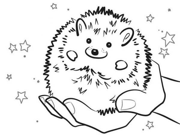 baby hedgehog smiling colouring coloring page