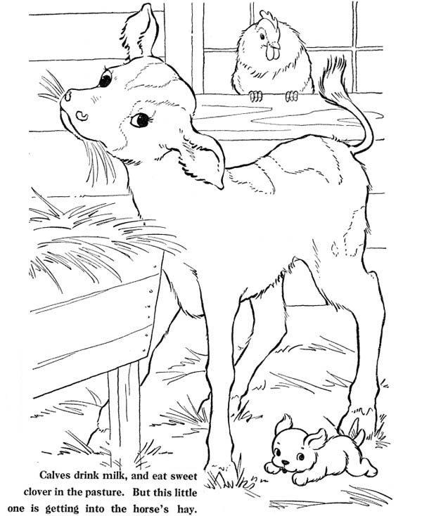 farm life coloring pages animal at barn bulk color