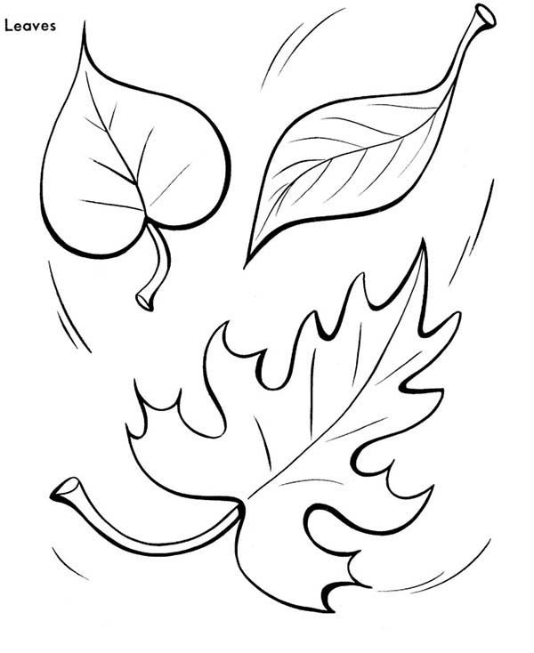 fall leaves coloring page coloring pages