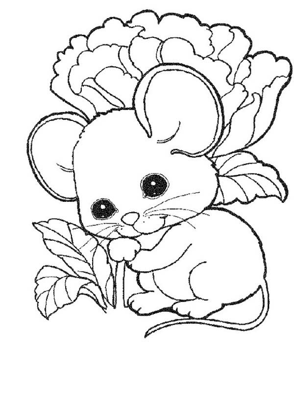 cute mouse and rat baby coloring pages bulk color