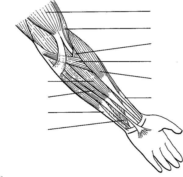 human anatomy arm coloring pages bulk color