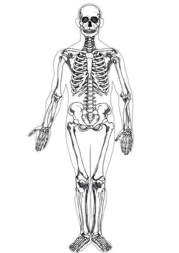 human anatomy photo human skeleton in human anatomy coloring pages