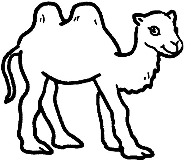 bactria camel at the beach coloring pages bulk color