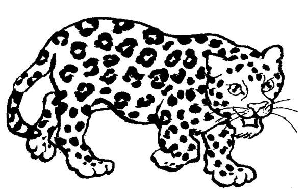 drawing jaguar coloring pages bulk color - Jaguar Coloring Pages