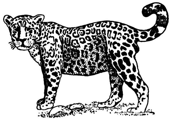 Baby Jaguar coloring page | 418x600