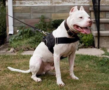 Order Tracking Nylon Dog Harness