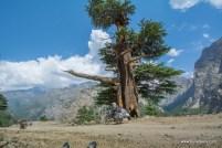 malari-village-uttarakhan-2012