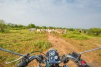 nalkeshwar-gwalior-3741