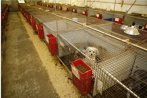 USDA Licensed and Inspected Dog Kennel