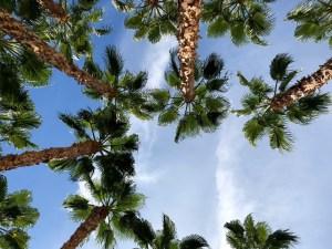 hilton garden inn palm springs rancho mirage hilton honors usa california kalifornien coachella palmen palms