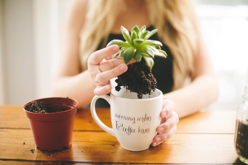 Planting Succulents in mugs - North Detail - Bungalows & Olives bungalowsandolives.com