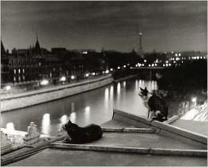 RobertDoisneau - 13-Paris-cats-at-night