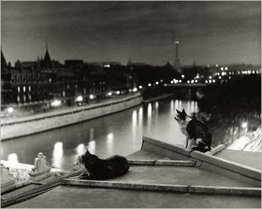 Paris, Cats At Night