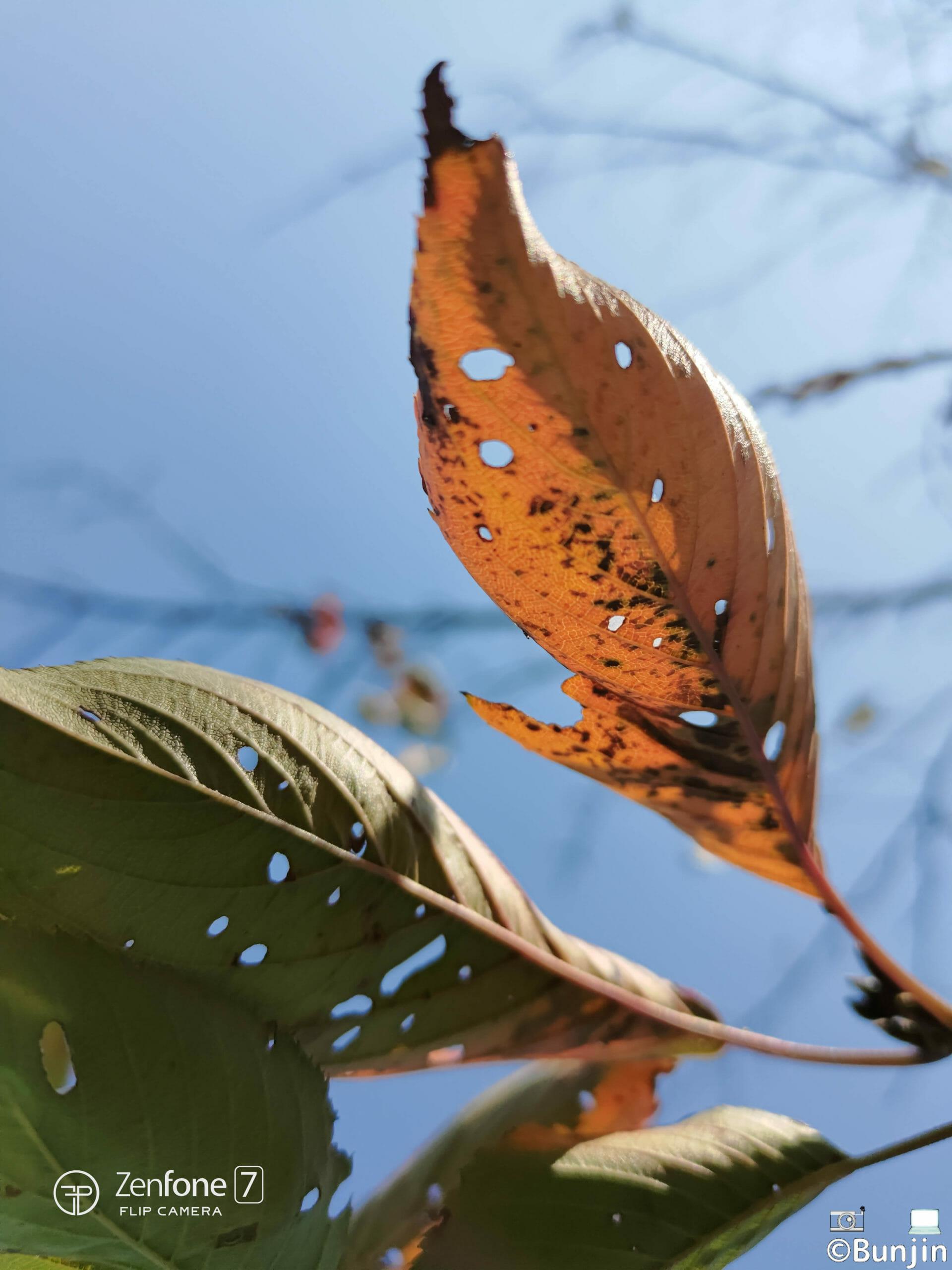 枯れ葉の裏側