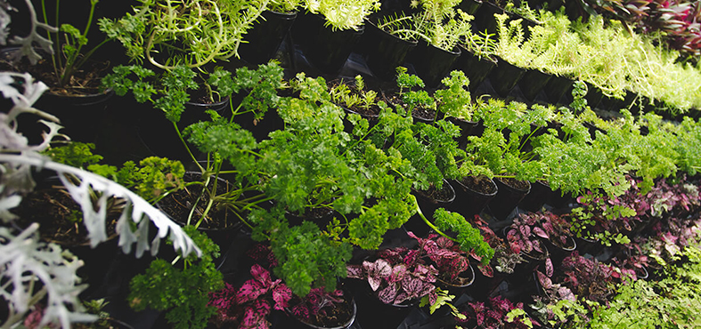 Shade Loving Plants For Your Garden Bunnings Warehouse Nz