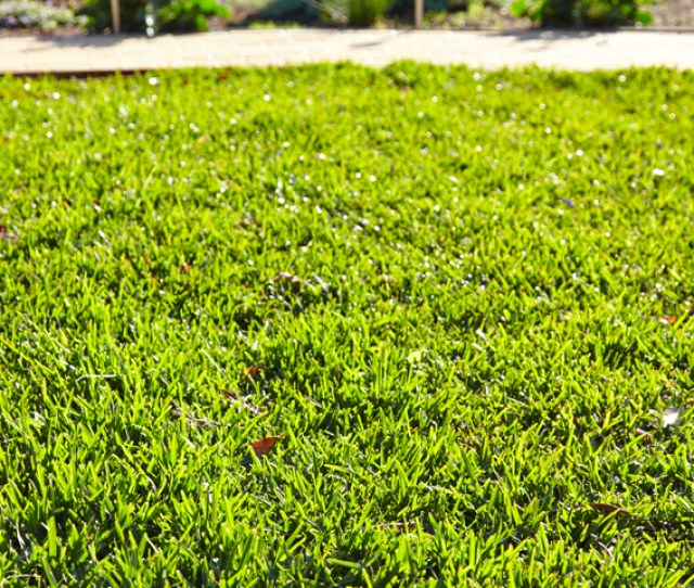 A Long Hot Summer Can Take Its Toll On Your Lawn Leaving It Patchy And Faded However Bunnings National Greenlife Buyer Rachel Has Some Great Ideas To