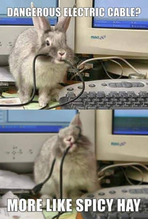 A rabbit eating a computer cable...and not a rabbit toy