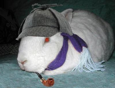 Image result for cute bunny in a hat