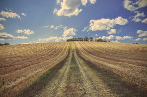 """Agrarpolitisch geprägte Agrarlandschaft: Karge Böden, Überdüngung, Monokulturen durch industrielle Landwirtschaft -- ob """"bio"""" oder konventionell."""