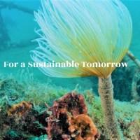 Carvico e Jersey Lomellina con Healthy Seas per il futuro sostenibile della moda