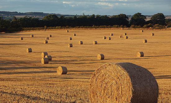 agricoltura(freefoto_7589952900@flickr_CC)