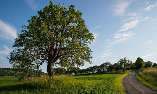 albero-dellanno-2015_(Ekopolis_cimaartphoto-sk.com)