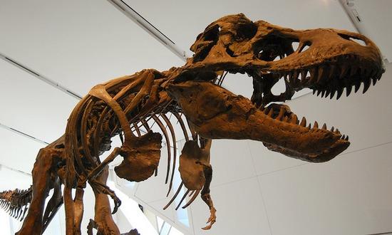 dinosauri_(shvmoz_2310971713@flickr-CC)