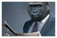 gorila (foto internet)