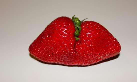 ogm-frutta_(krystalchu-4684240040)