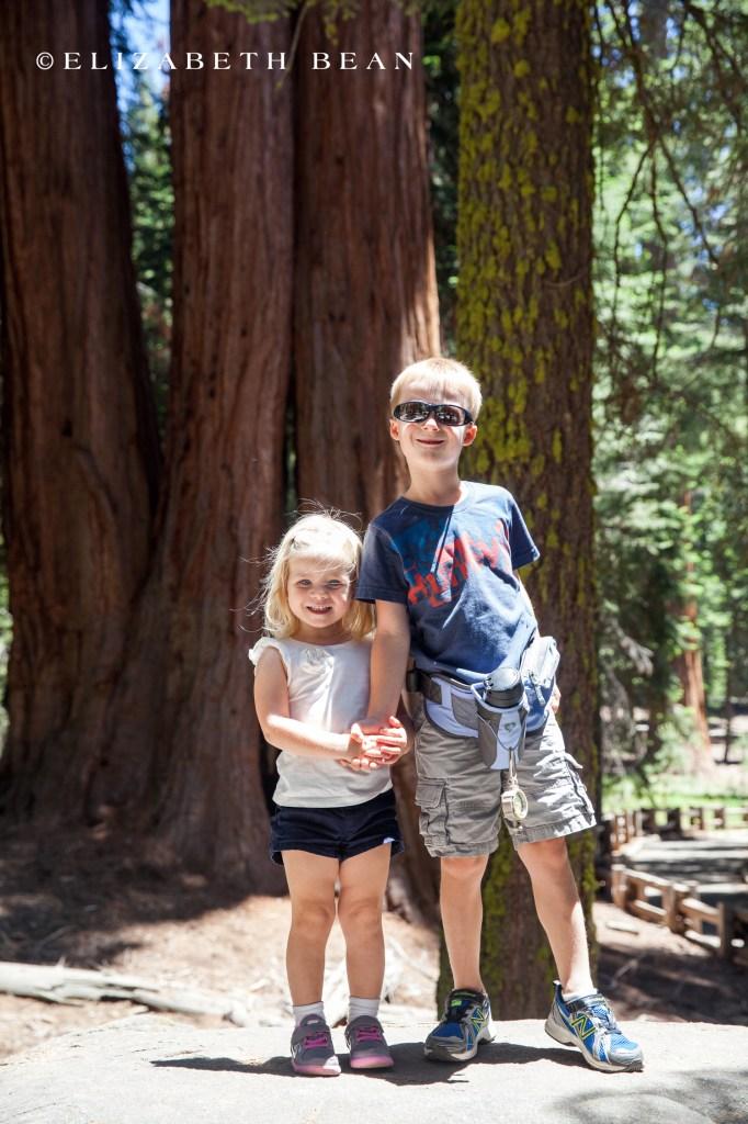 070114 Sequoia 20