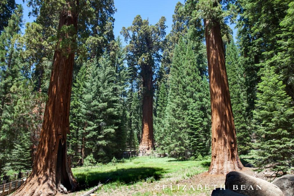 070114 Sequoia 24
