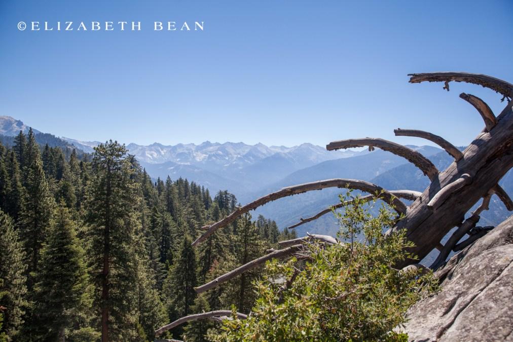 070214 Sequoia 06