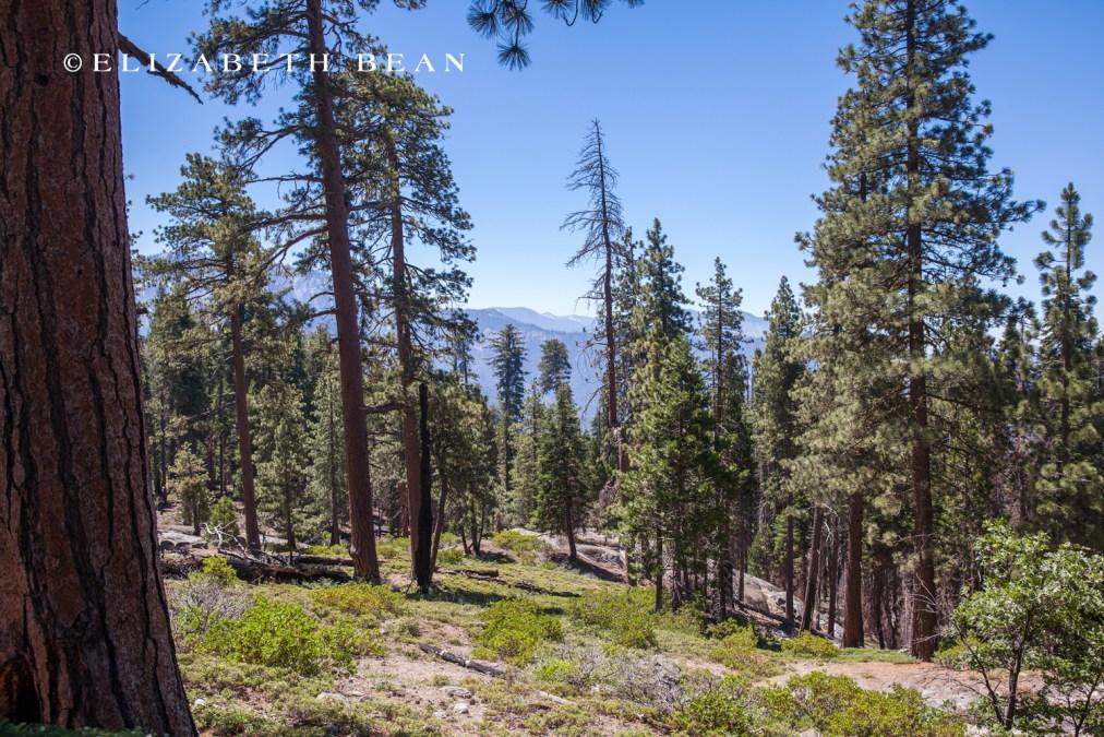070214 Sequoia 41