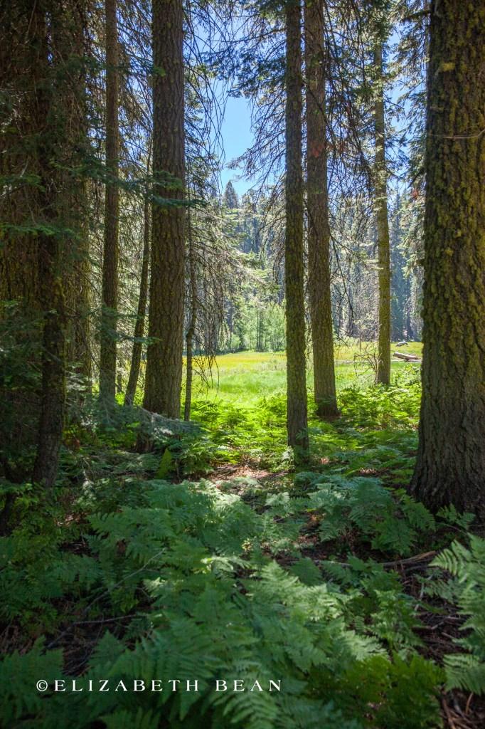 070214 Sequoia 43