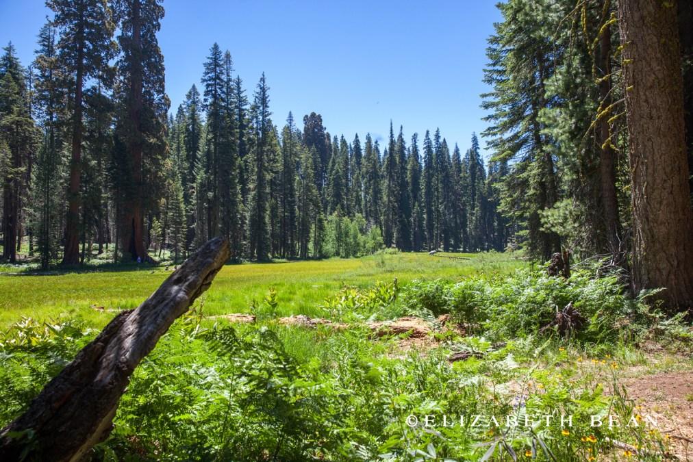 070214 Sequoia 45
