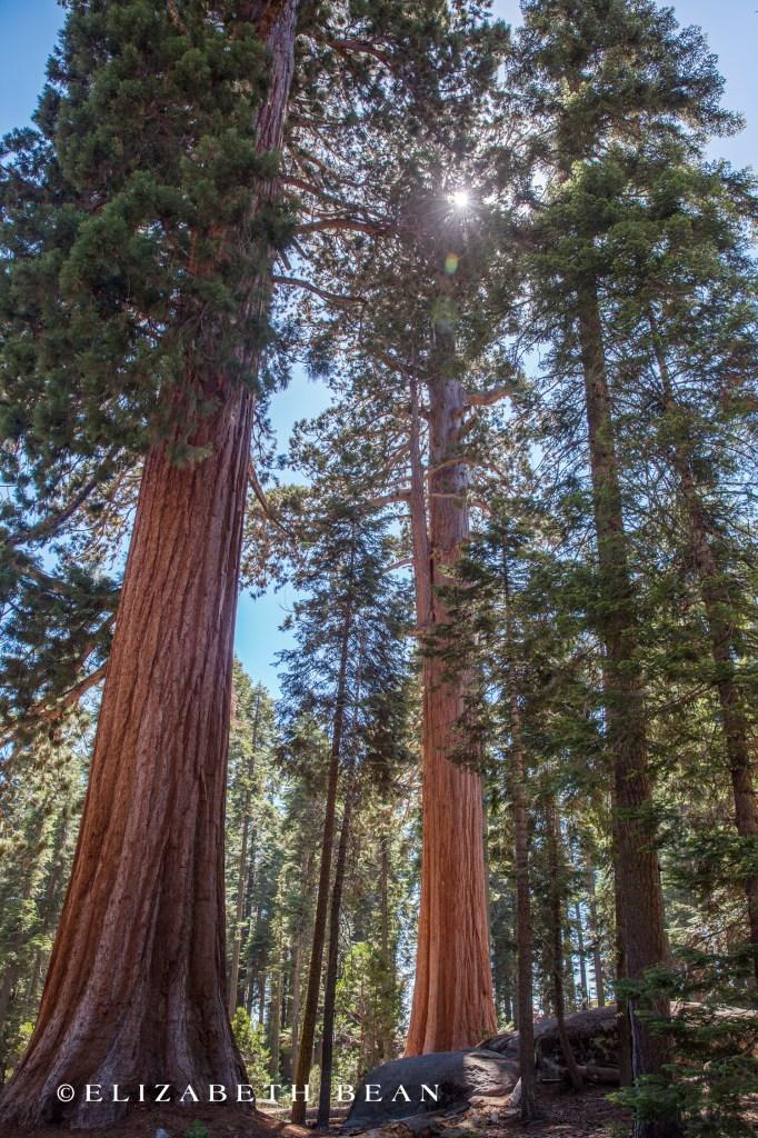 070214 Sequoia 76