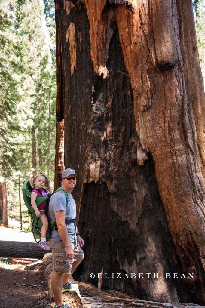 070314 Sequoia 04