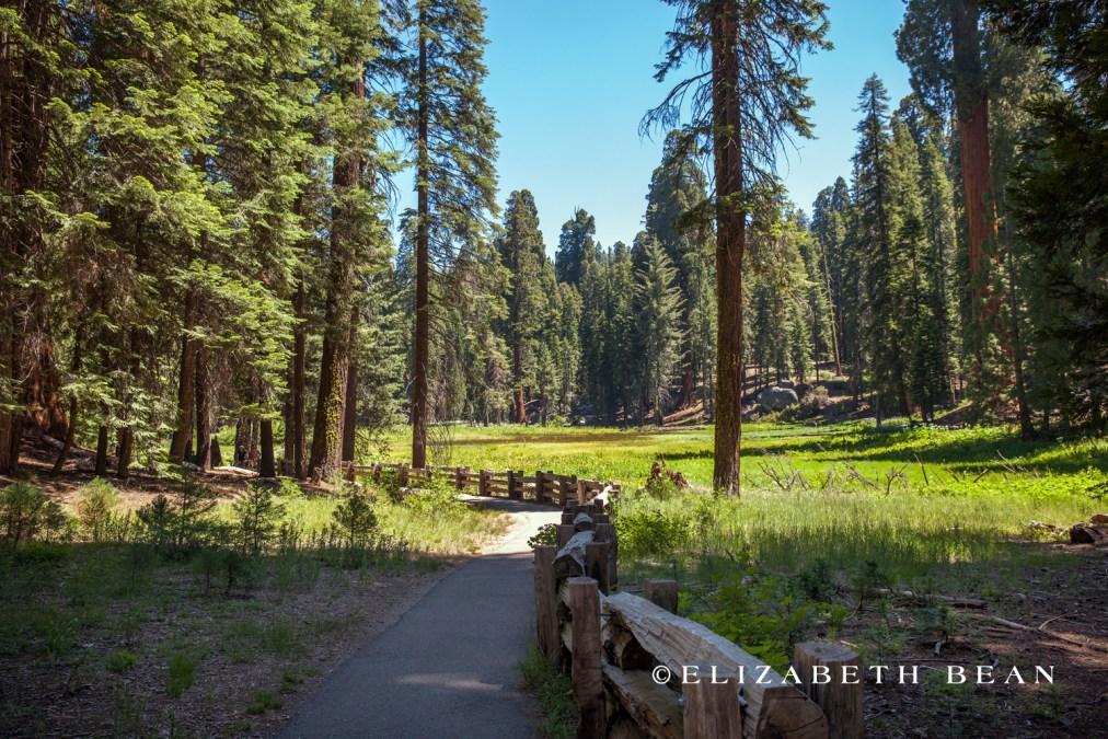 070314 Sequoia 31