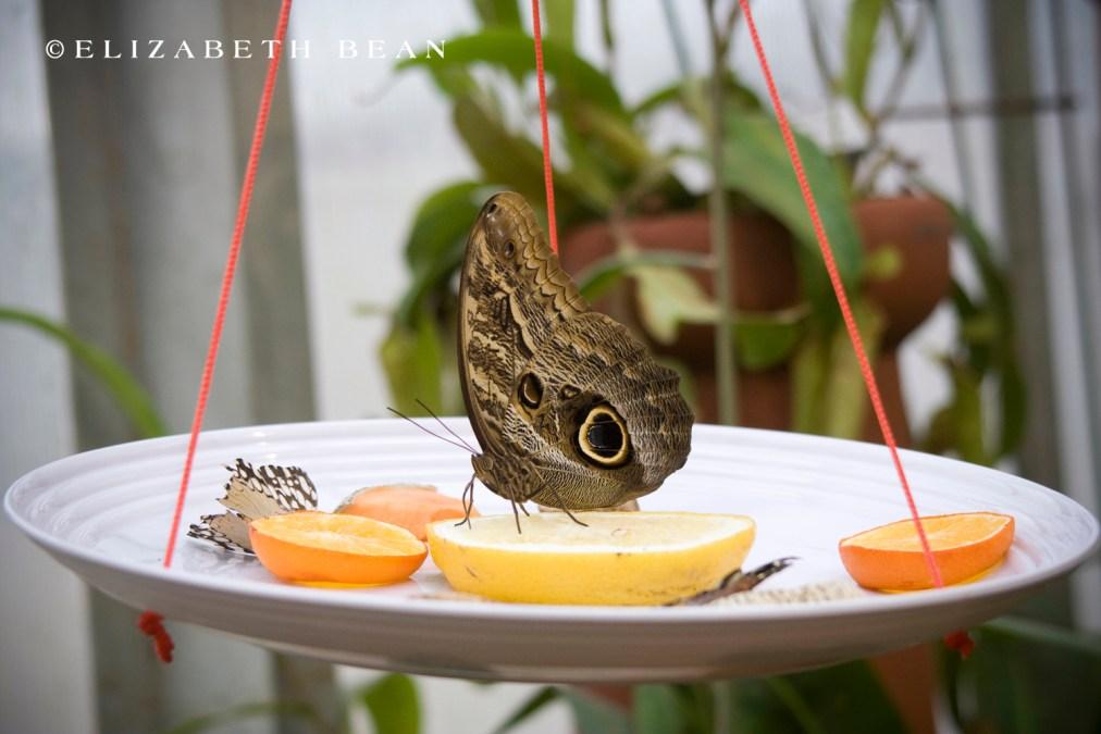 030809 Butterfly 27