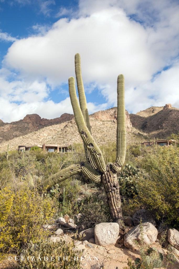 112615 Tucson 11