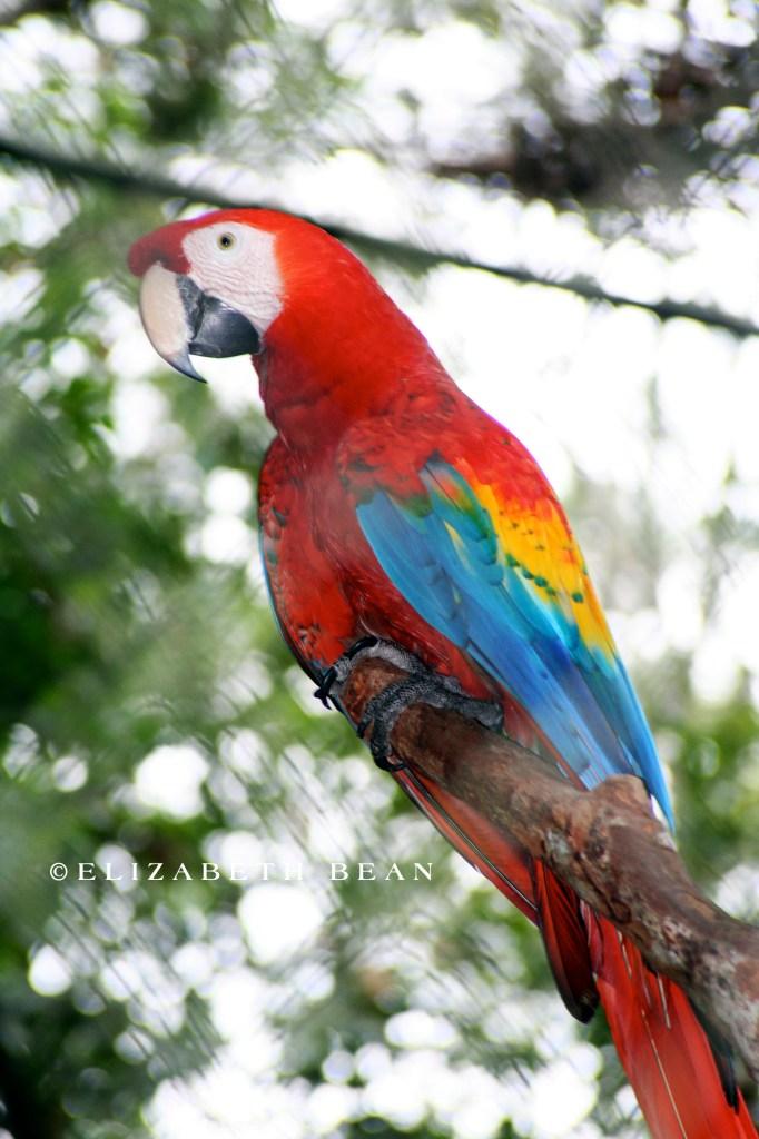 050307 Belize 34