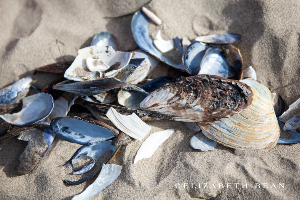 022214 Ventura Beach 19