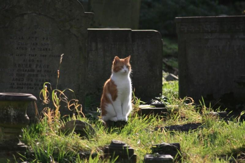 Grab Katze, Highgate Cemetery London Grab Grave Karl Marx Douglas Adams